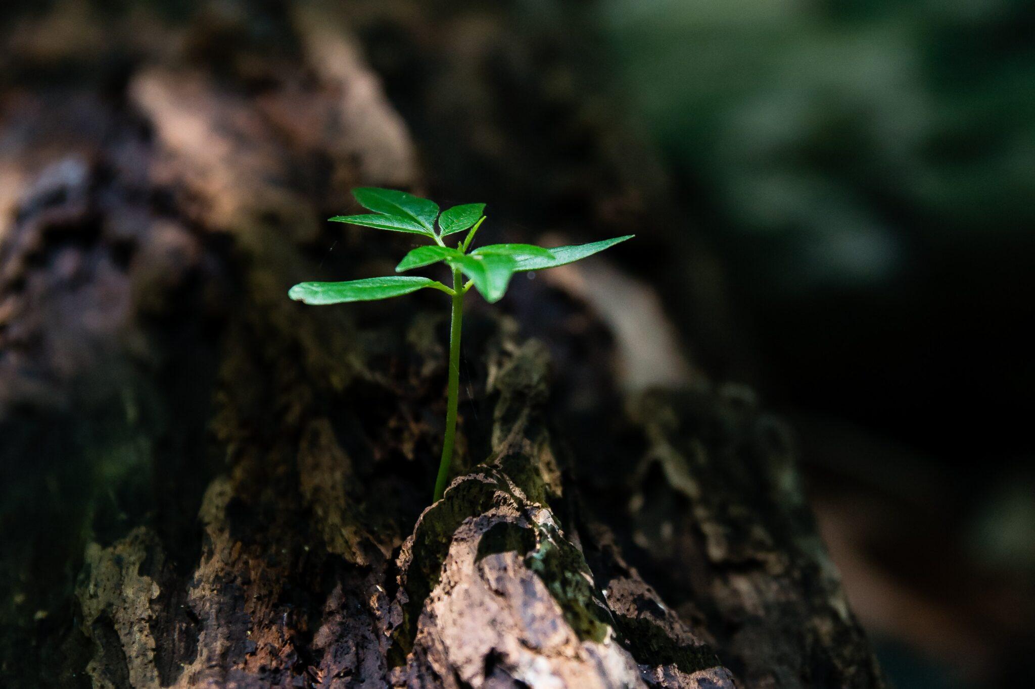 Nova súmula do STJ sobre o ônus da prova em matéria ambiental