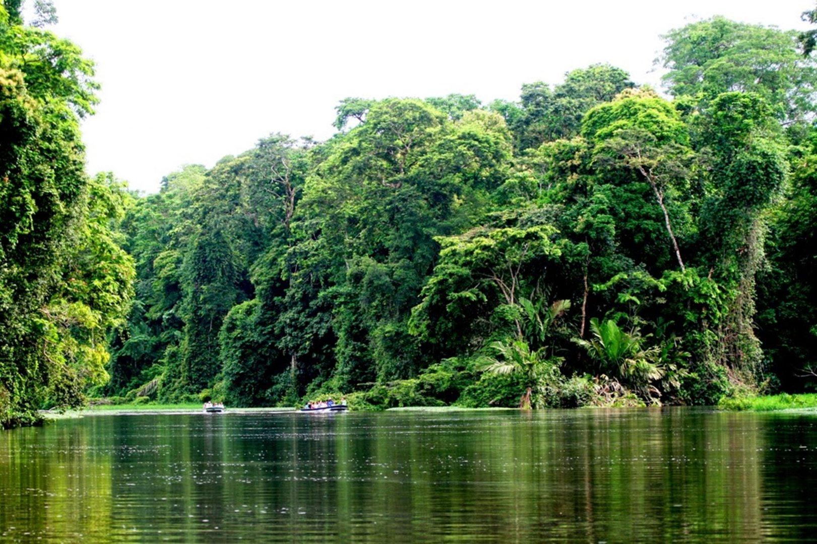 O novo pacote de concessões florestais do Governo Federal