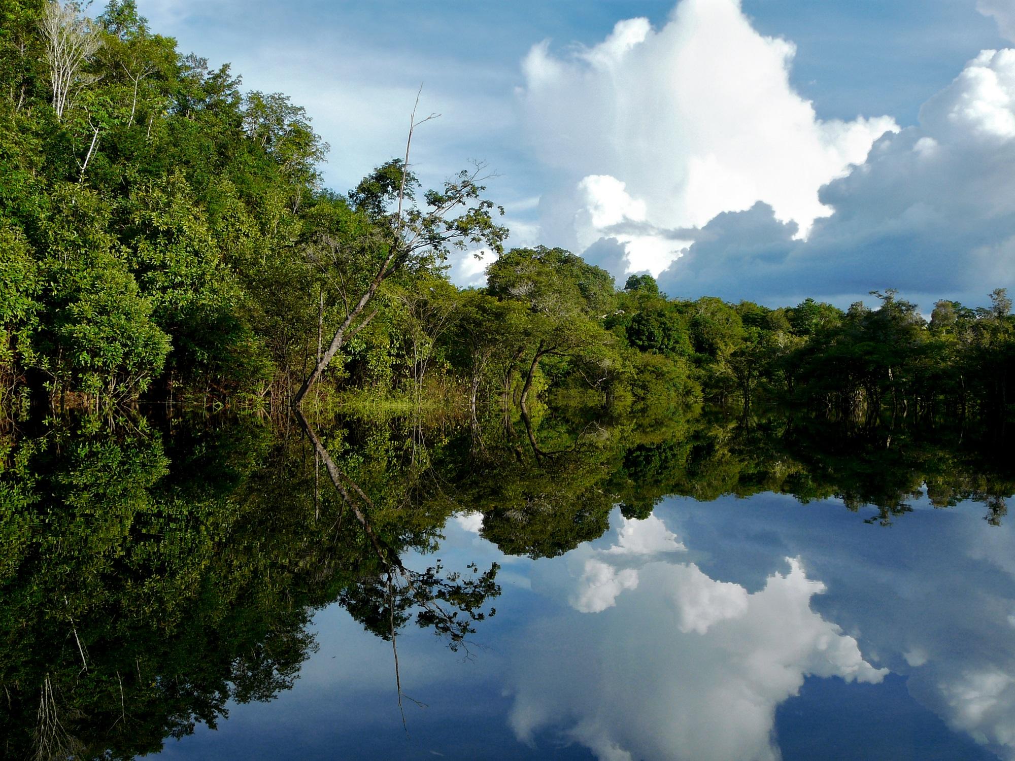 Novas concessões de florestas públicas